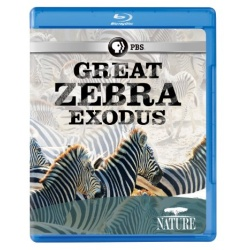 Nature: Great Zebra Exodus Blu-ray Cover
