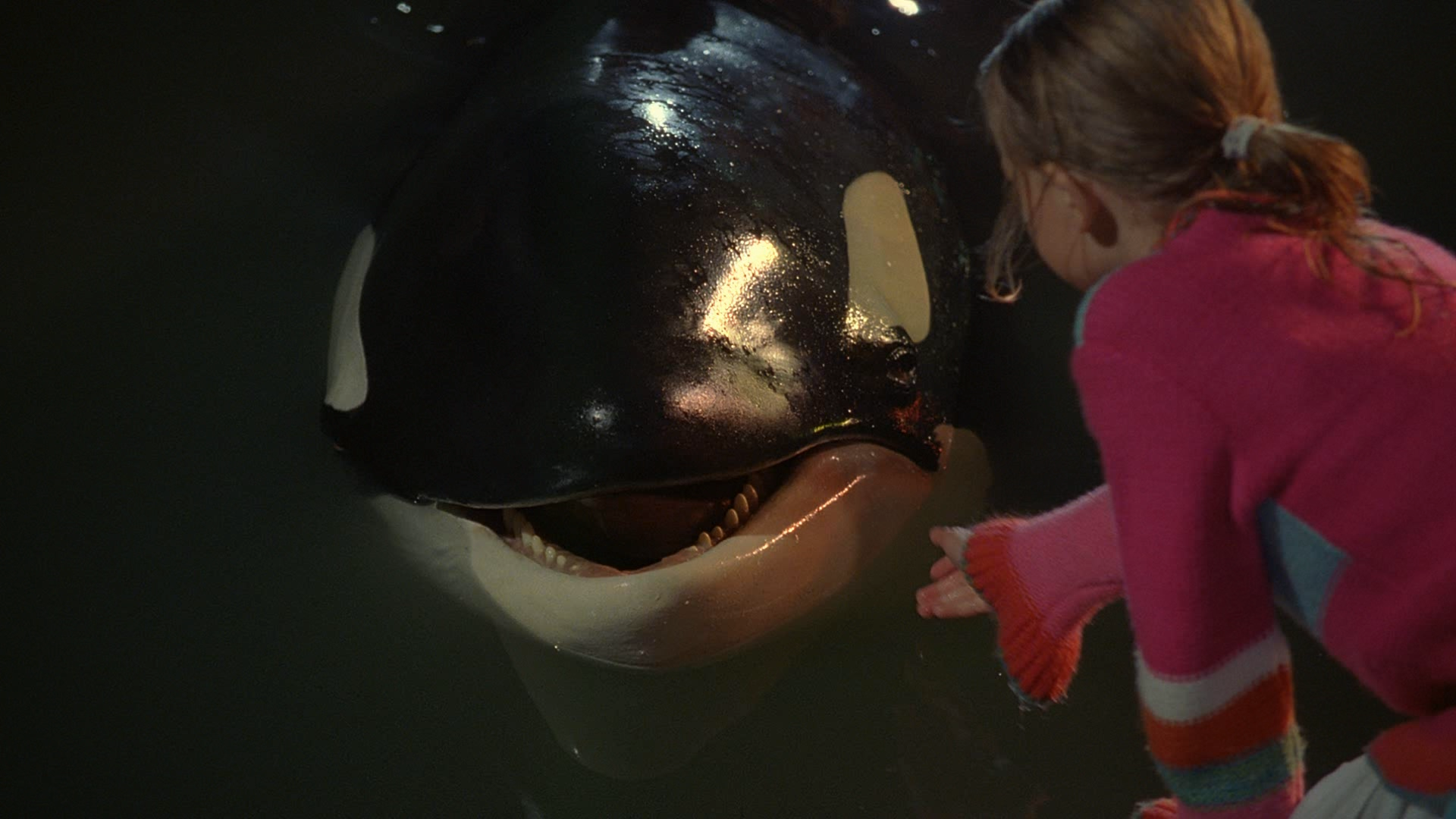 Free Willy: Escape from Pirate's Cove movies